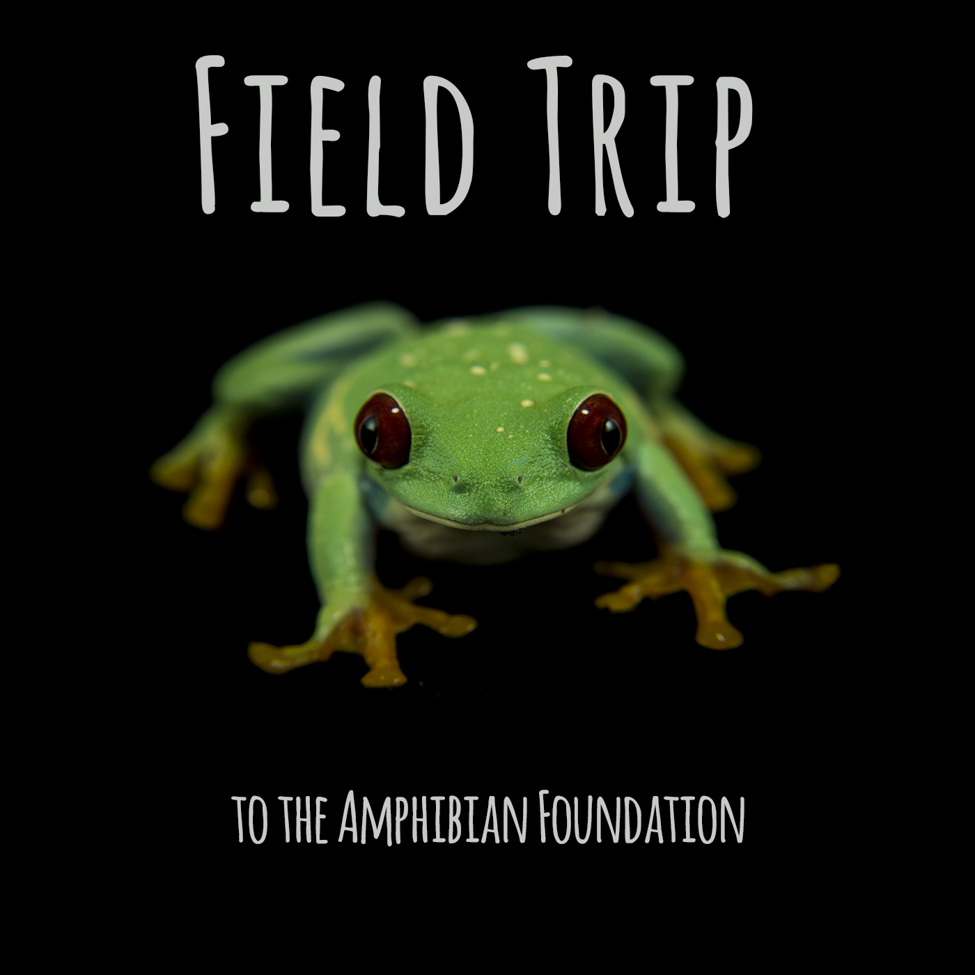 Field Trip to the Amphibian Foundation