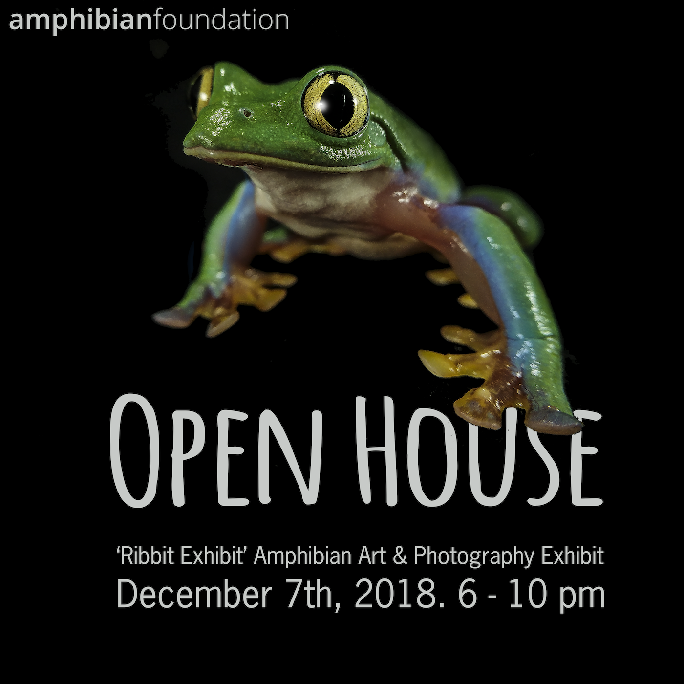 Open House and Ribbit Exhibit Gallery Opening