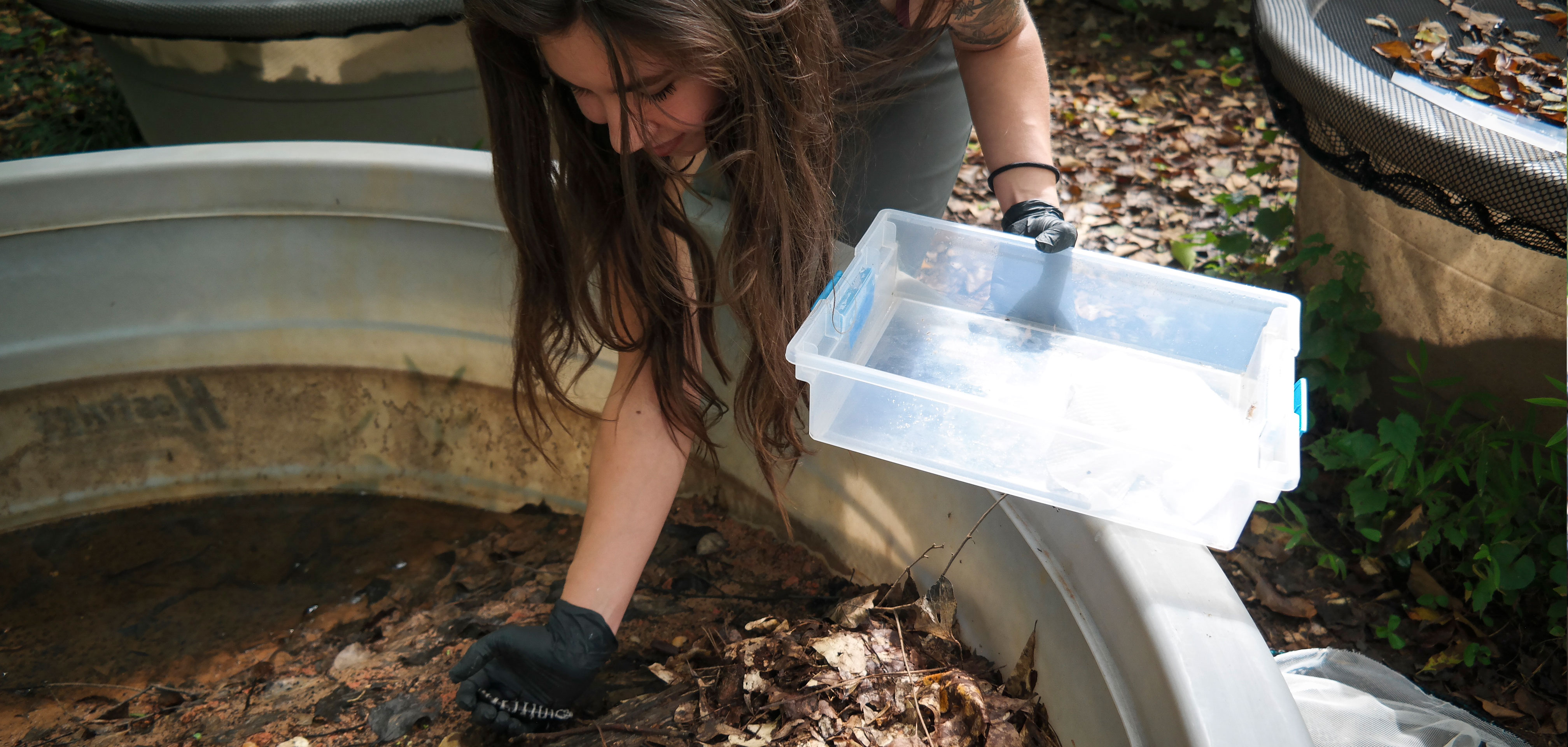 Expanding the Field of Conservation Research: The Amphibian Foundation Launches New Adult Educational Program